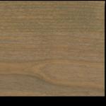 Driftwood on Alder